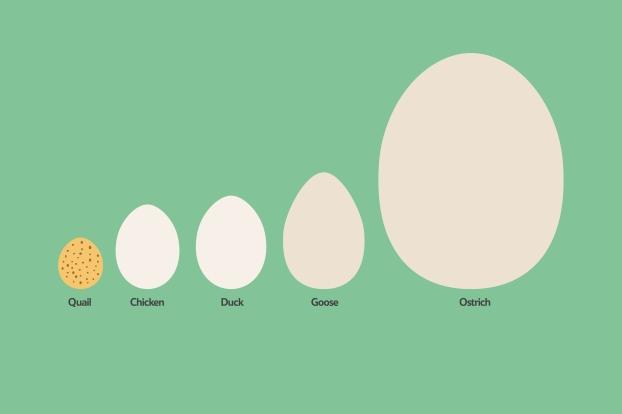 Eggs_TypesOfEggs